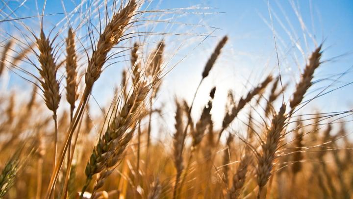 Comienza en junio el programa sobre Actividad Agropecuaria